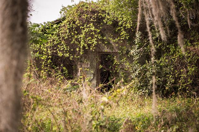 Abandoned House, Florida