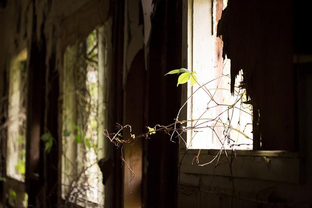 Abandoned House, Florida - Pic 5
